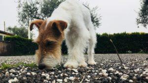 olfatto del cane 2