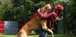 Cane che salta sulle persone