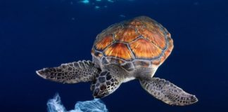 ridurre il consumo di plastica