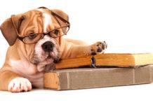 Educhiamo i nostri cani