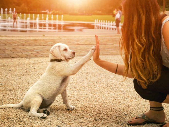 Segreti per educare il tuo cane