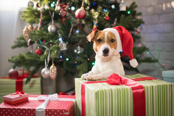 Cane sotto l'albero